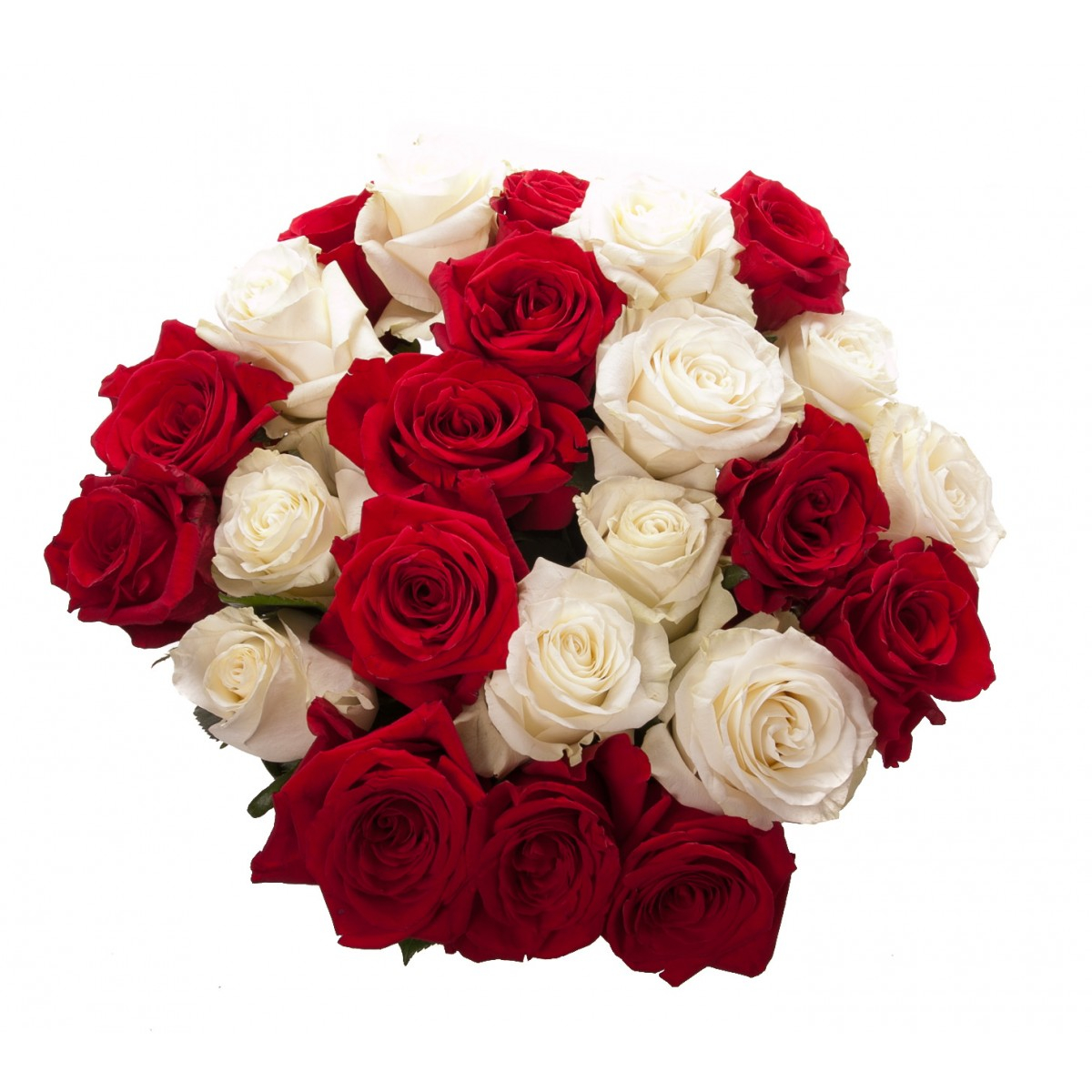 Valentines Day Rose Bouquet Red and White Flower Muse