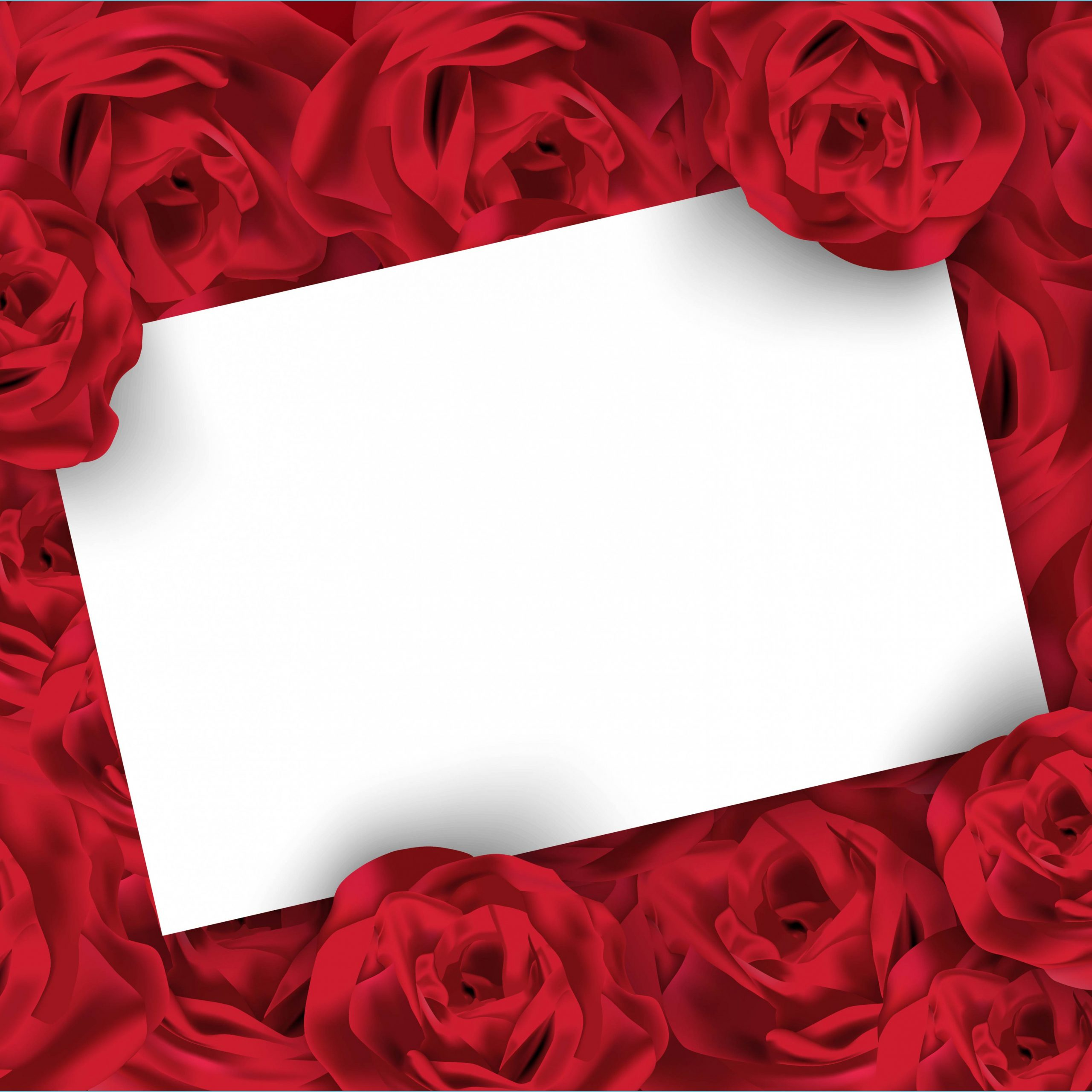 valentines day rose background with white blank card rose background scaled