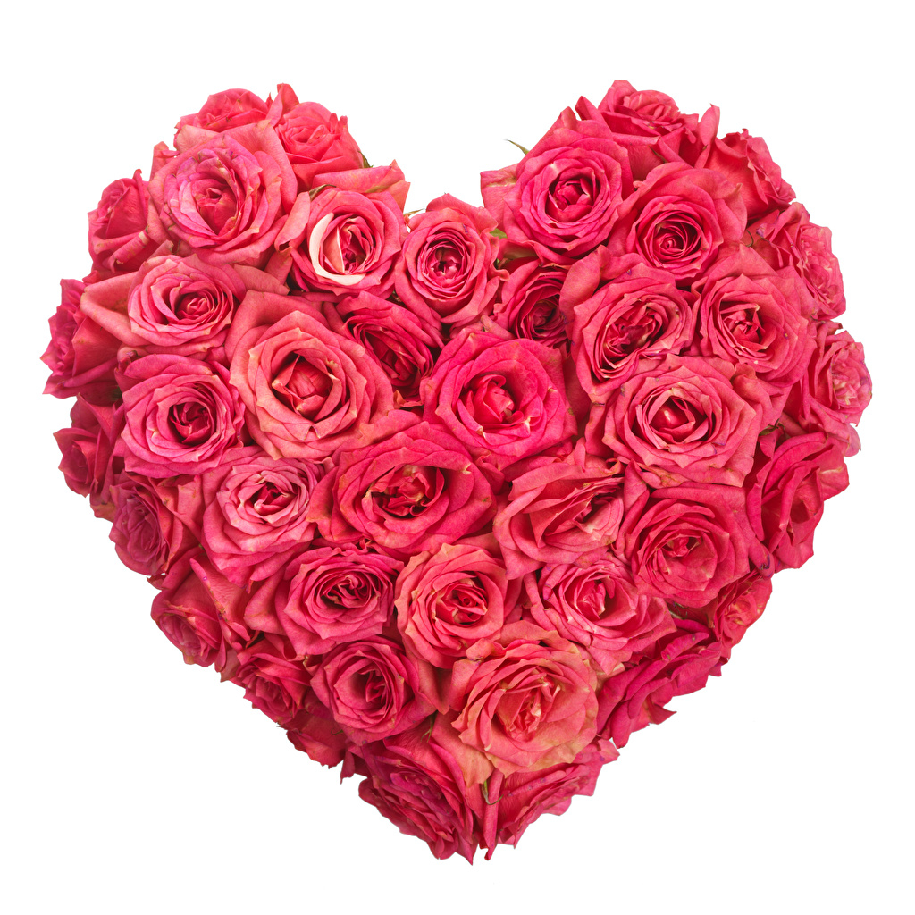 Valentine s Day Roses White background Pink color 1024x1024
