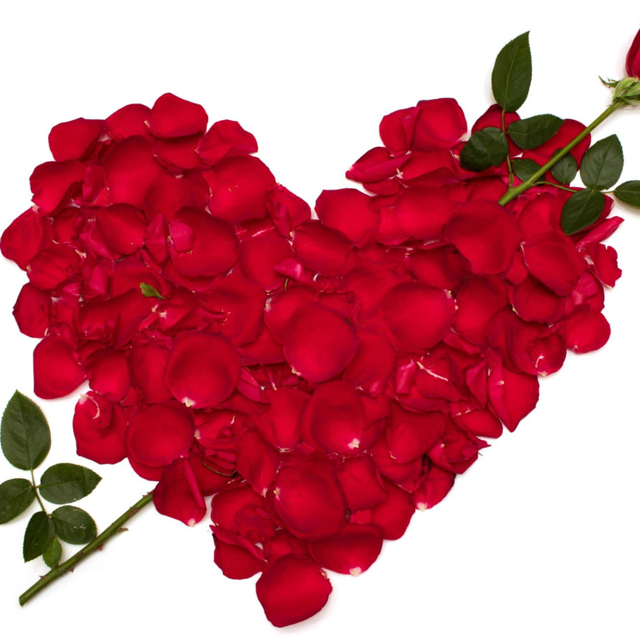 roses heart red petals flowers love valentines day valentine 2021 wallpaper