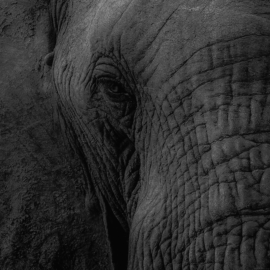 papers mh89 elephant eye animal nature 6 wallpaper