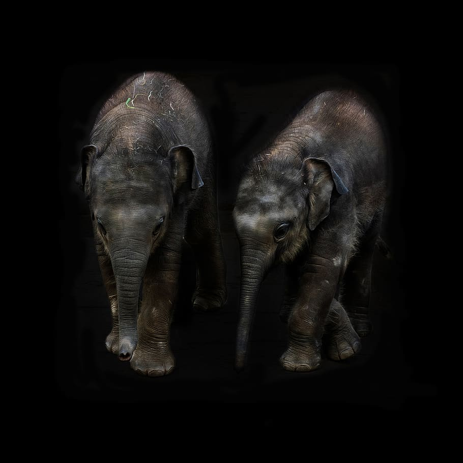 search wallpaper=elephant calf&page=3
