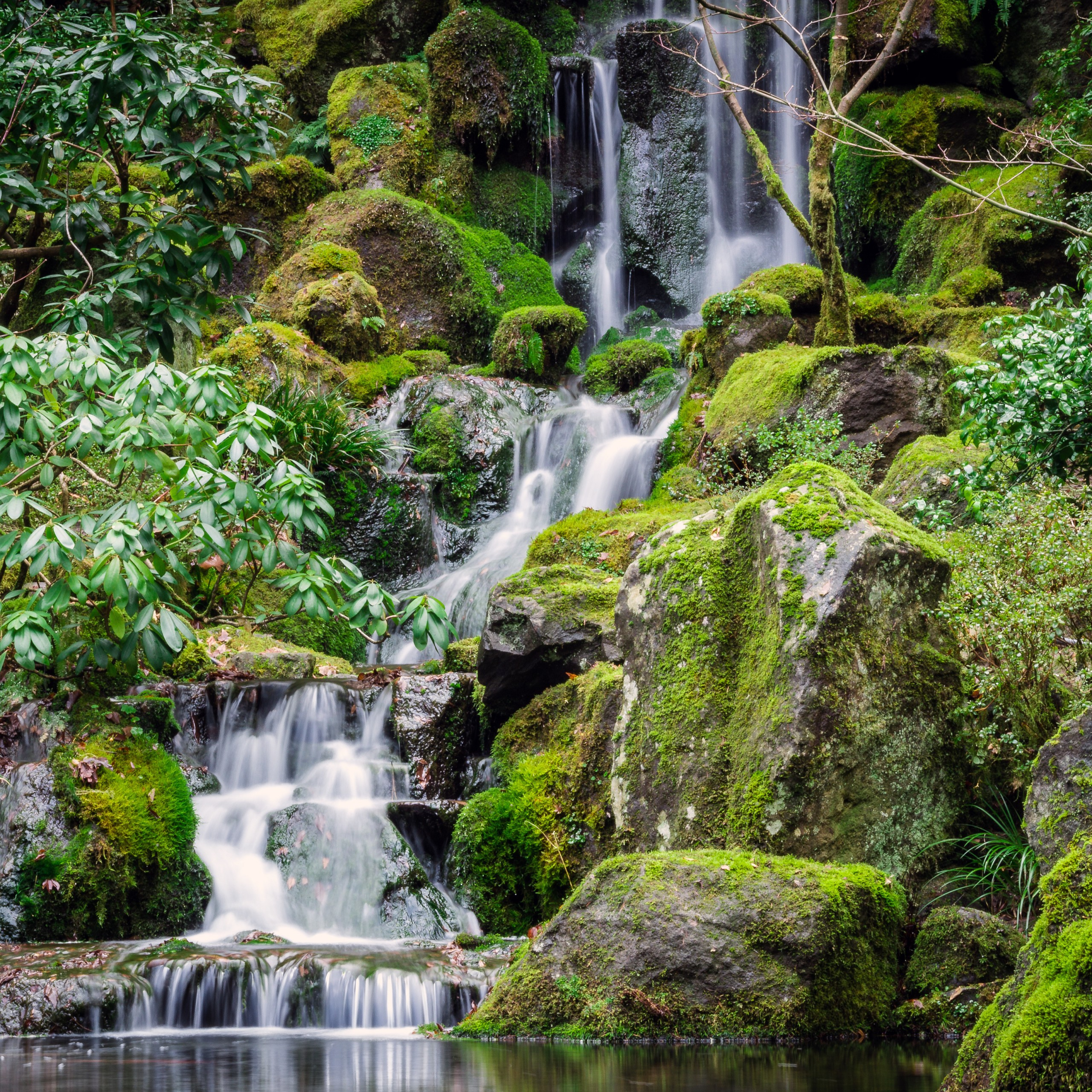 portland japanese gardens waterfalls green moss rocks 2560x2560 3845