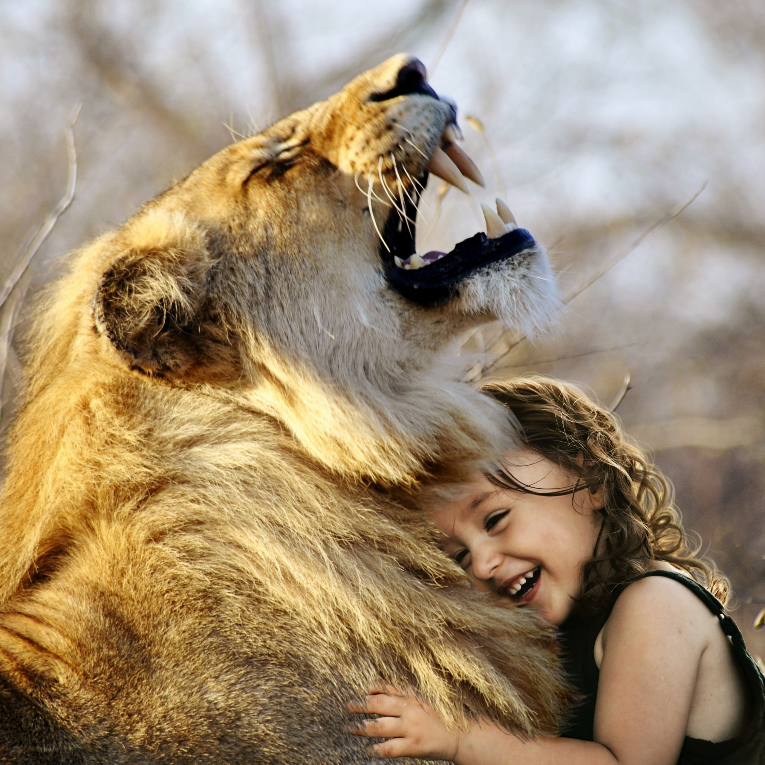 lion cute girl cute child laughing roaring wild adorable 2732x2732 1124