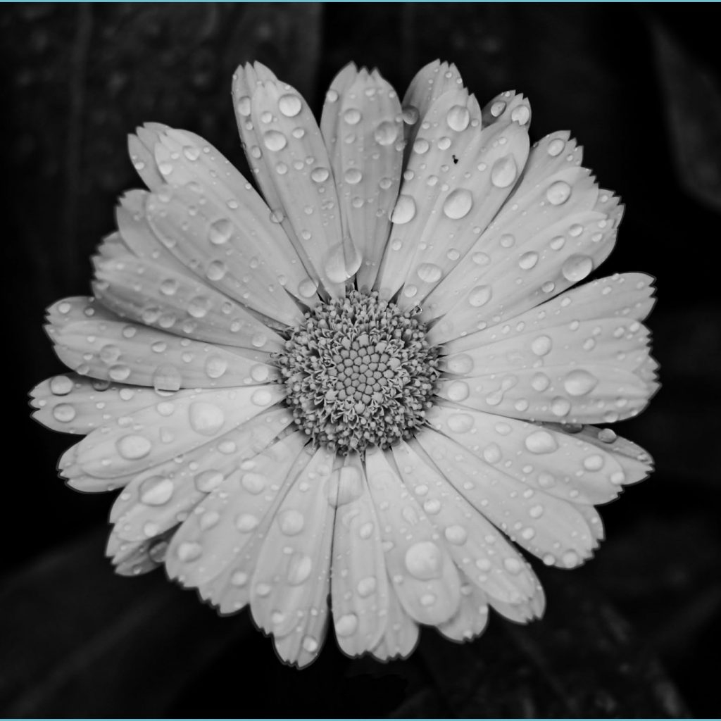 aesthetic black and white 14x14 hd wallpaper aesthetic black and white wallpaper