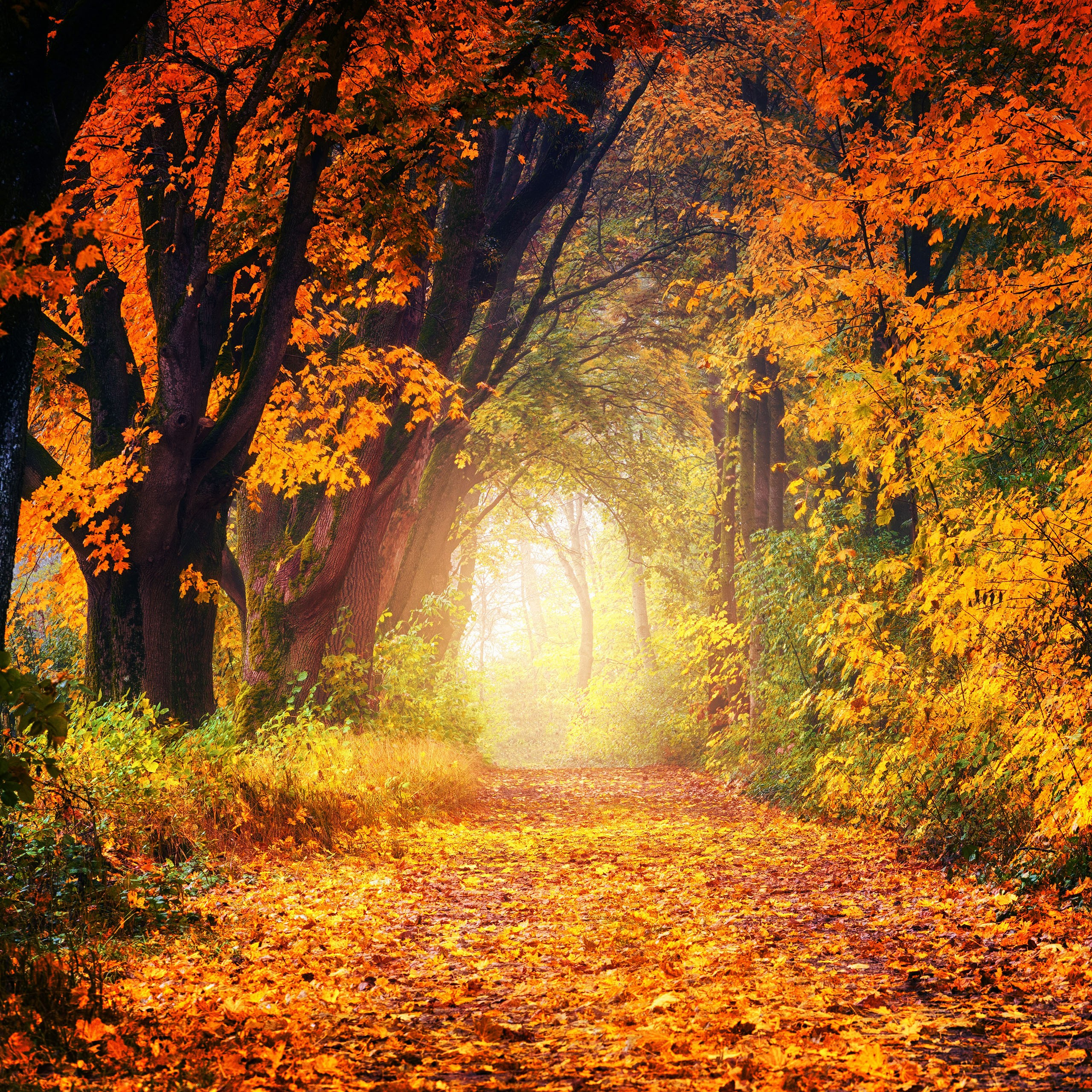 autumn forest path 4k 5k wallpapers