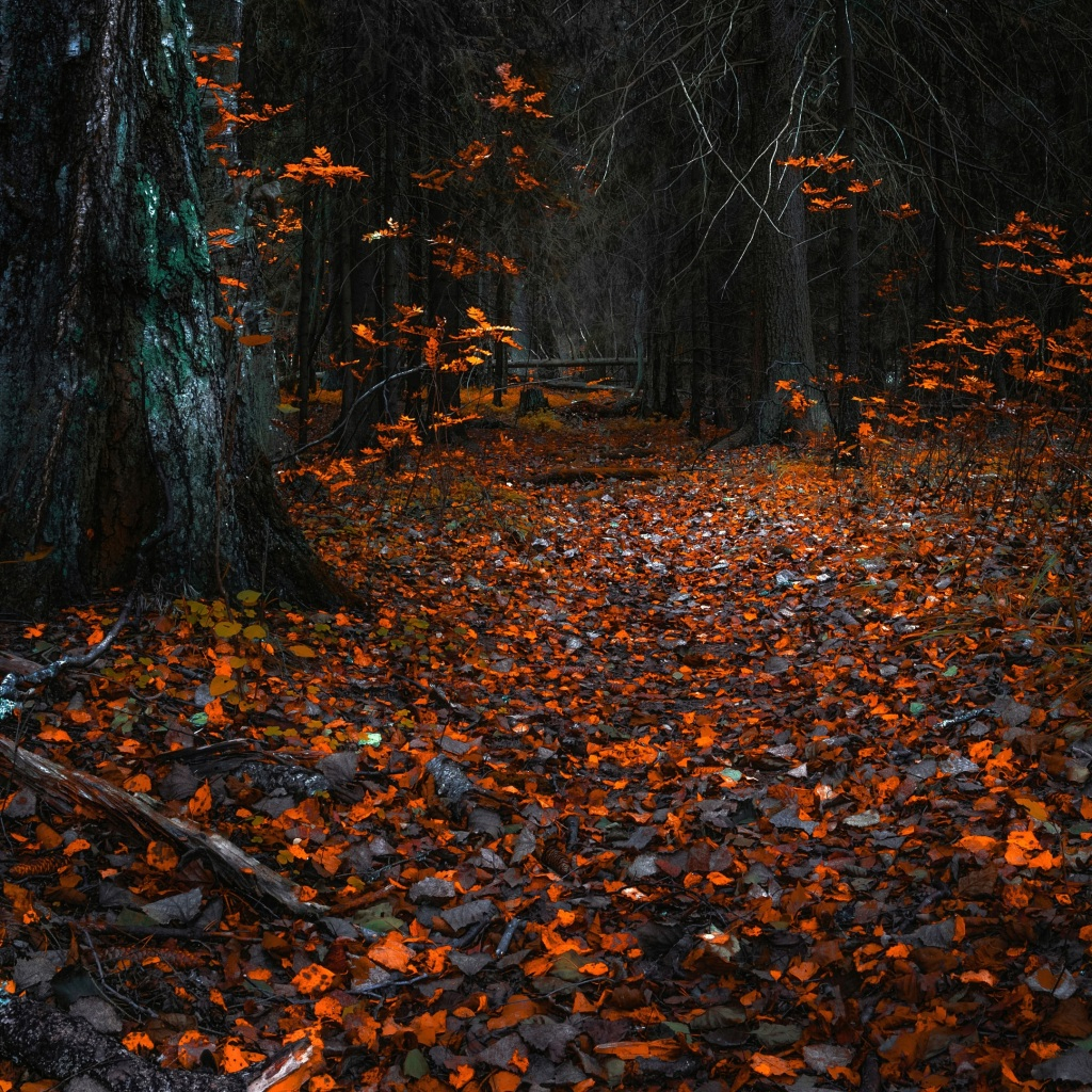 forest leaves autumn 4k