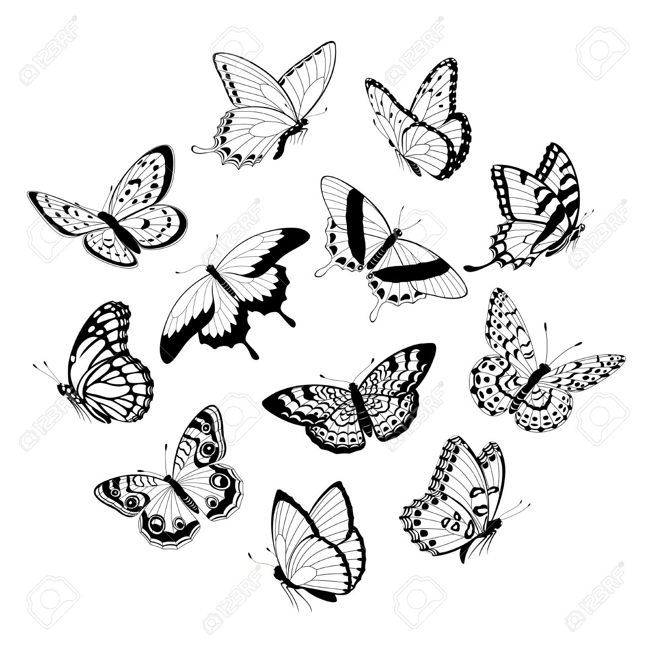 photo set of flying black and white butterflies isolated on white background