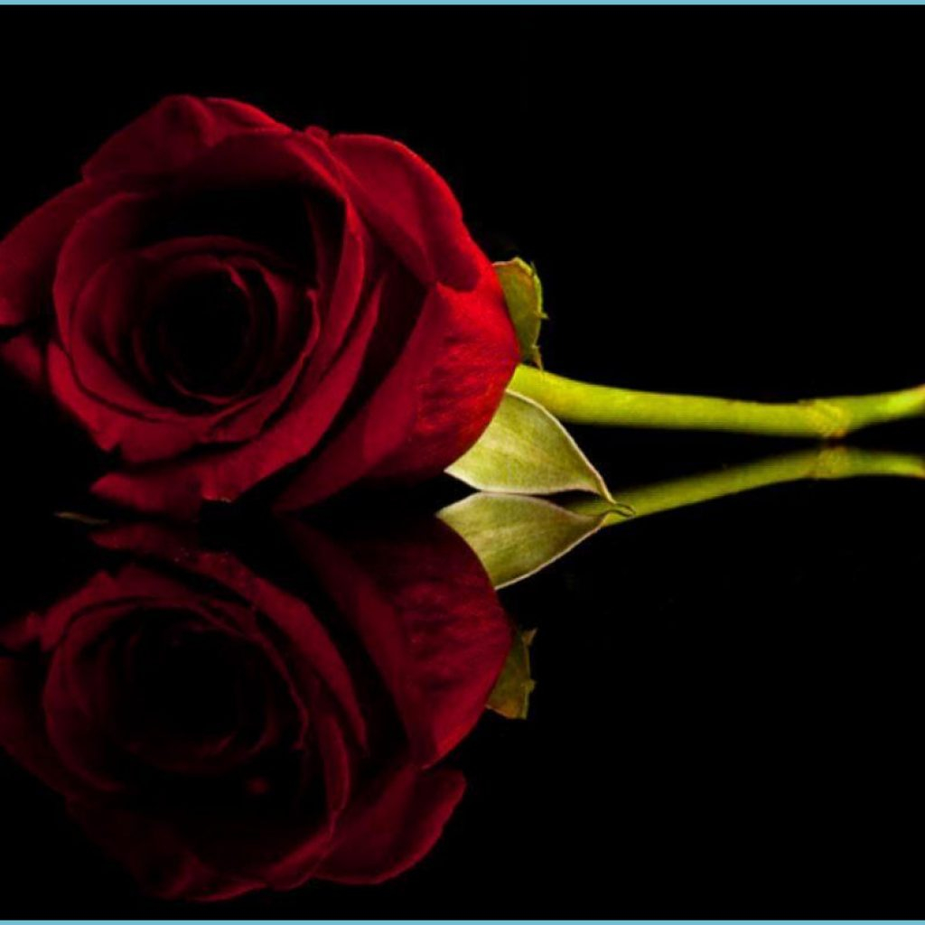 black and red roses wallpapers wallpaper cave black and red rose wallpaper 1024x1024