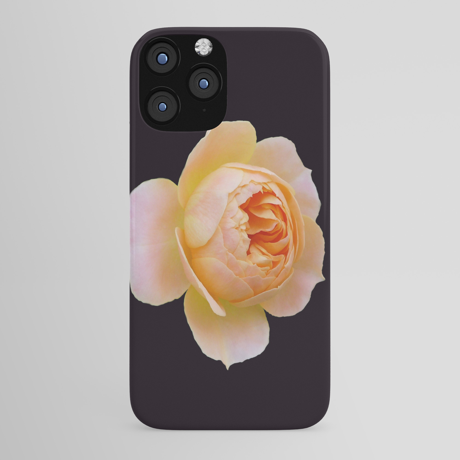 portrait of a rose on black background iphone case