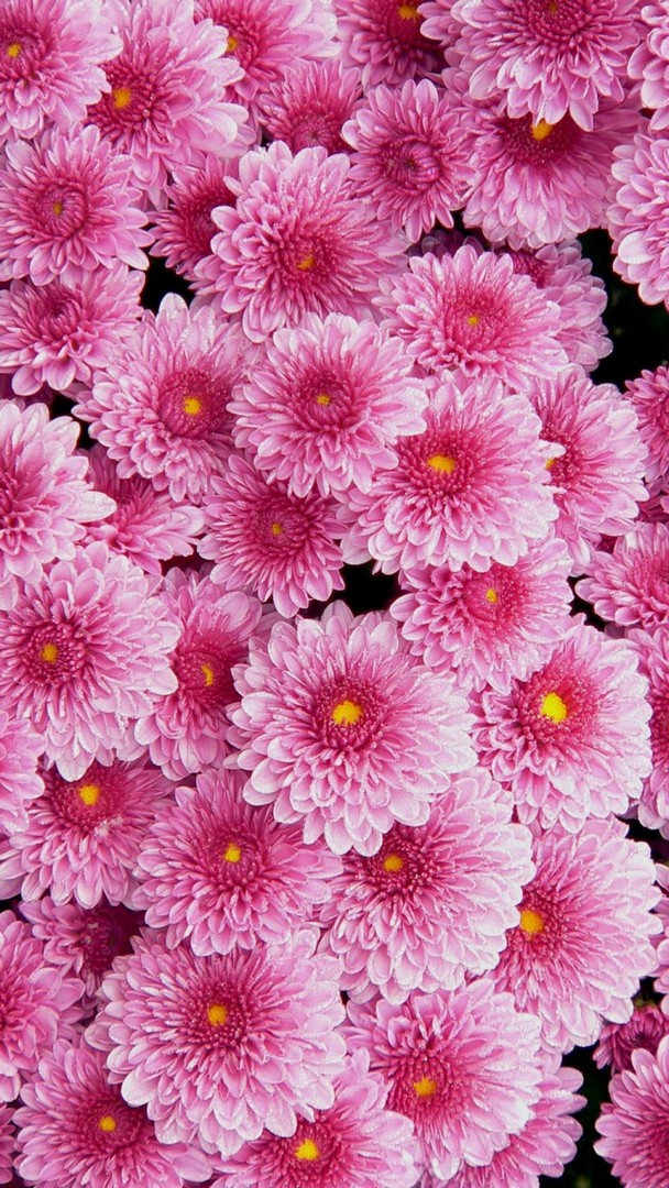 awesome pink flowers wallpaper iphone 1643