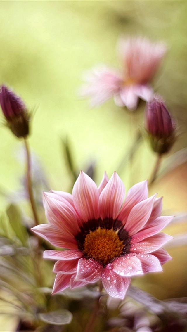 cute floral iphone wallpapers