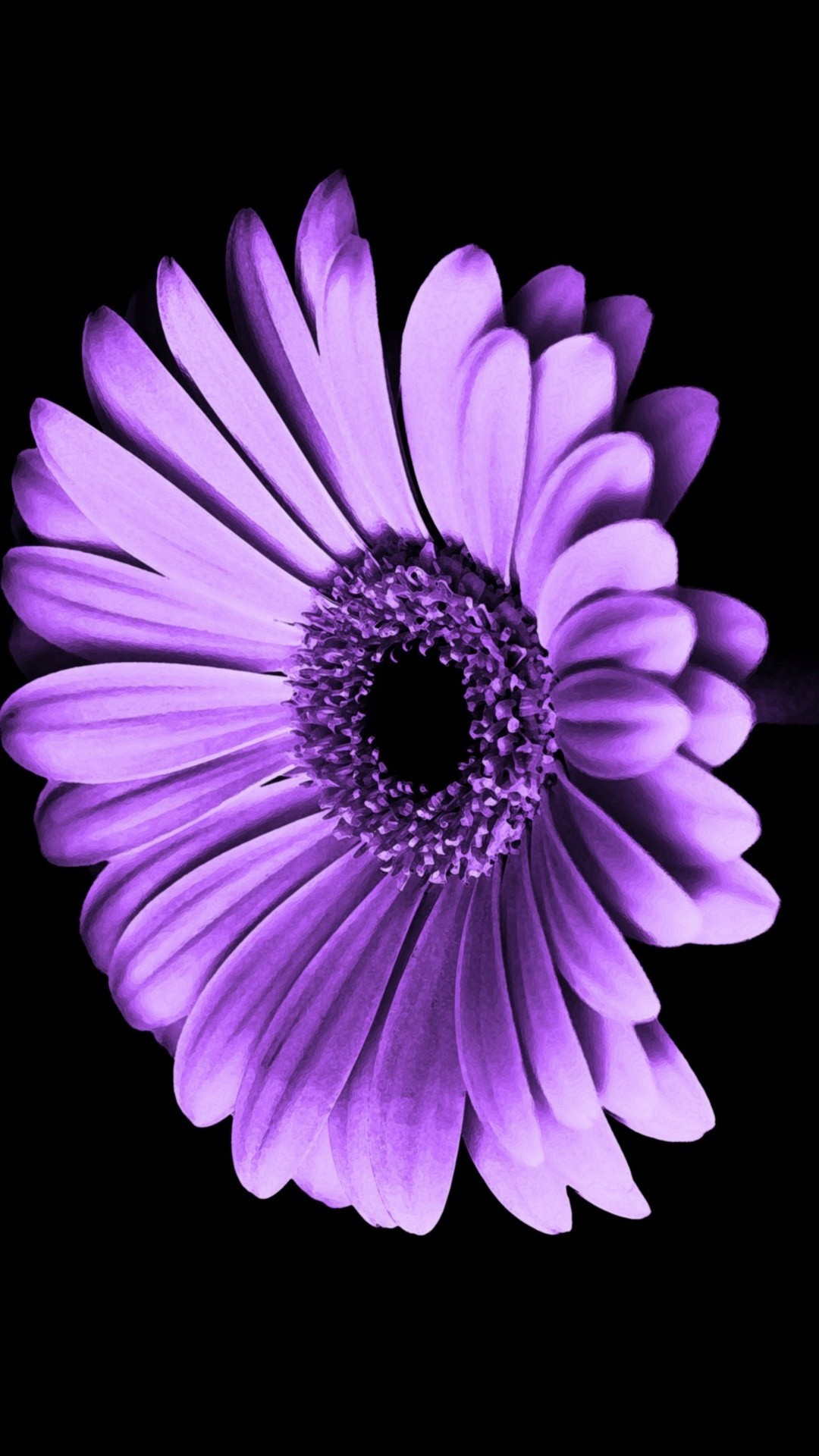 purple flowers iphone wallpaper hd 1816