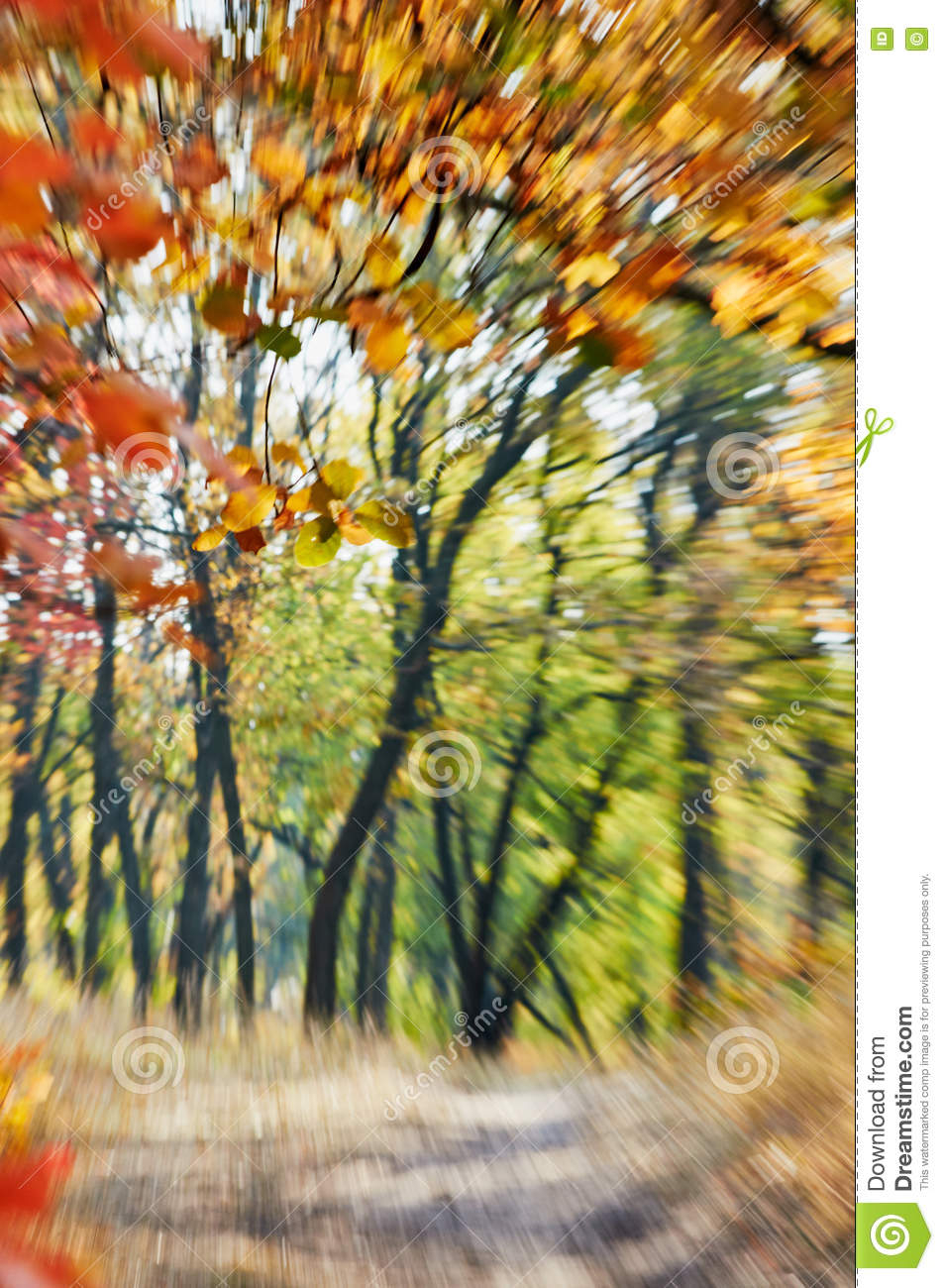 autumn motion zoom blurred abstract background natural colorful tree sunny forest natural