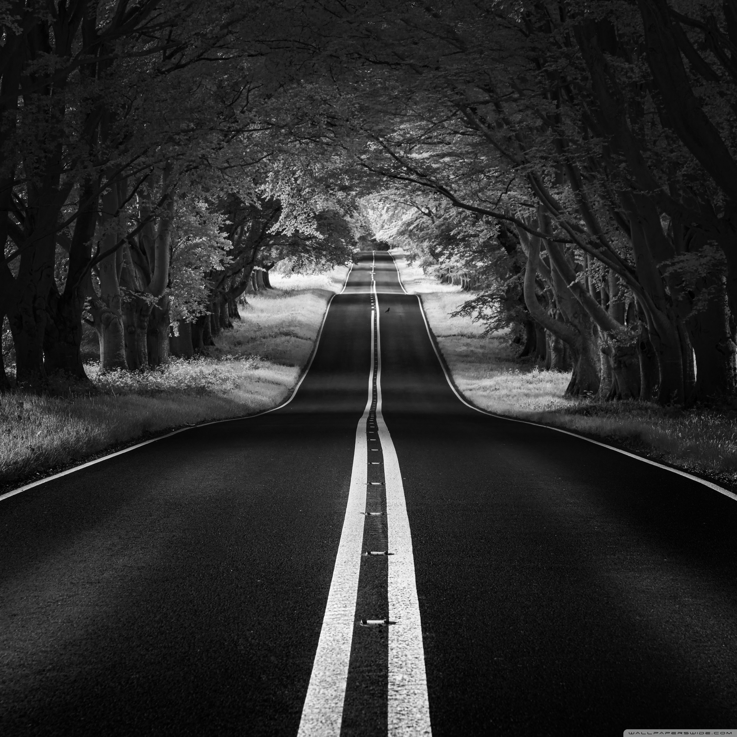 road landscape aesthetic black and white wallpaper 2560x2560