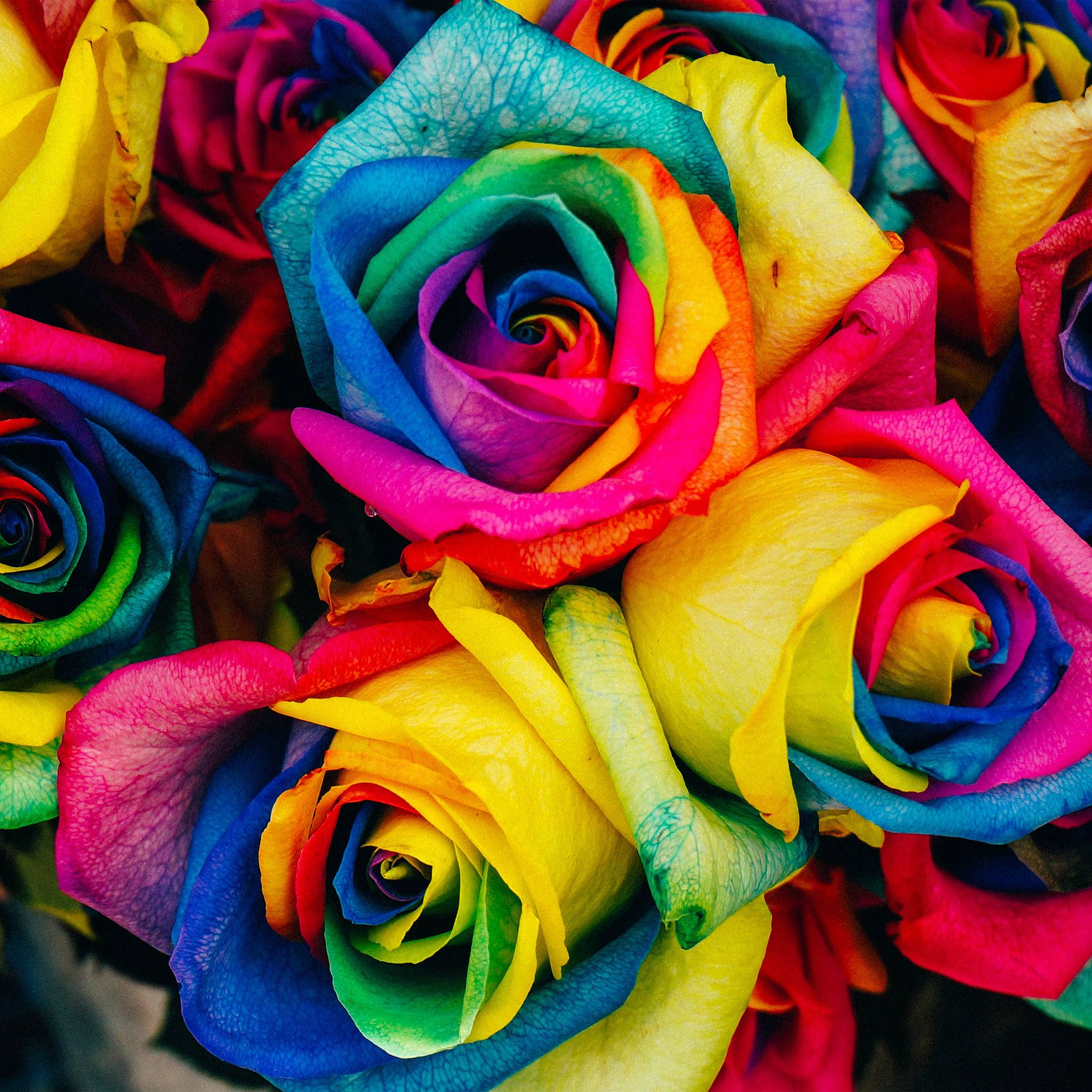 Flower Rose Color Rainbow Art Nature ipad air wallpaper ilikewallpaper