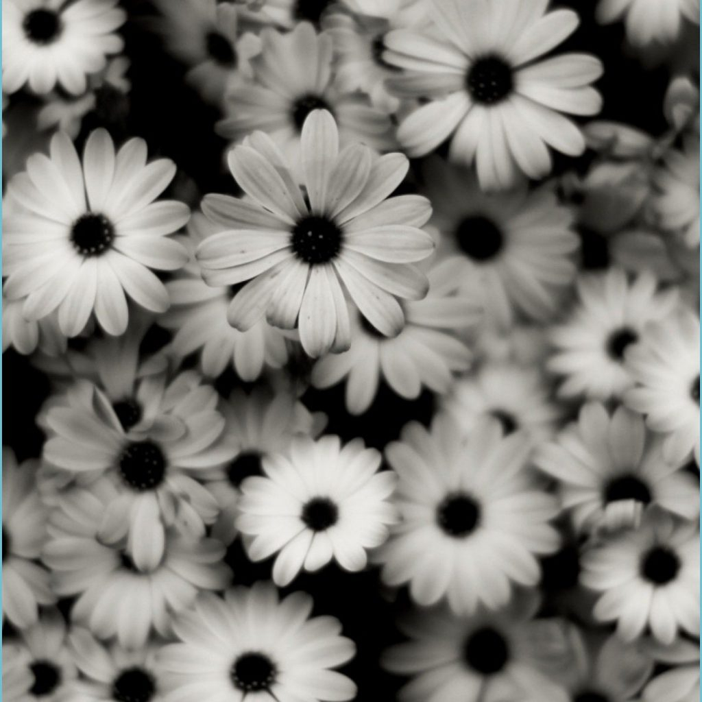 11x11 preview wallpaper black white flowers grey daisies black and white iphone wallpaper