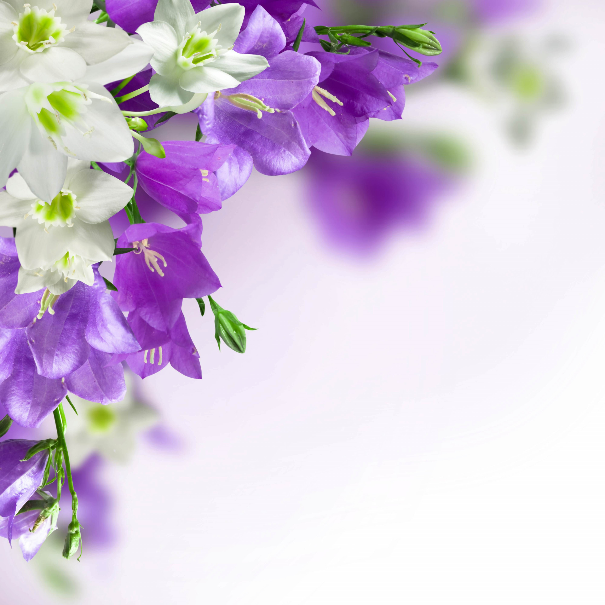 High Res White and Purple Flower Background