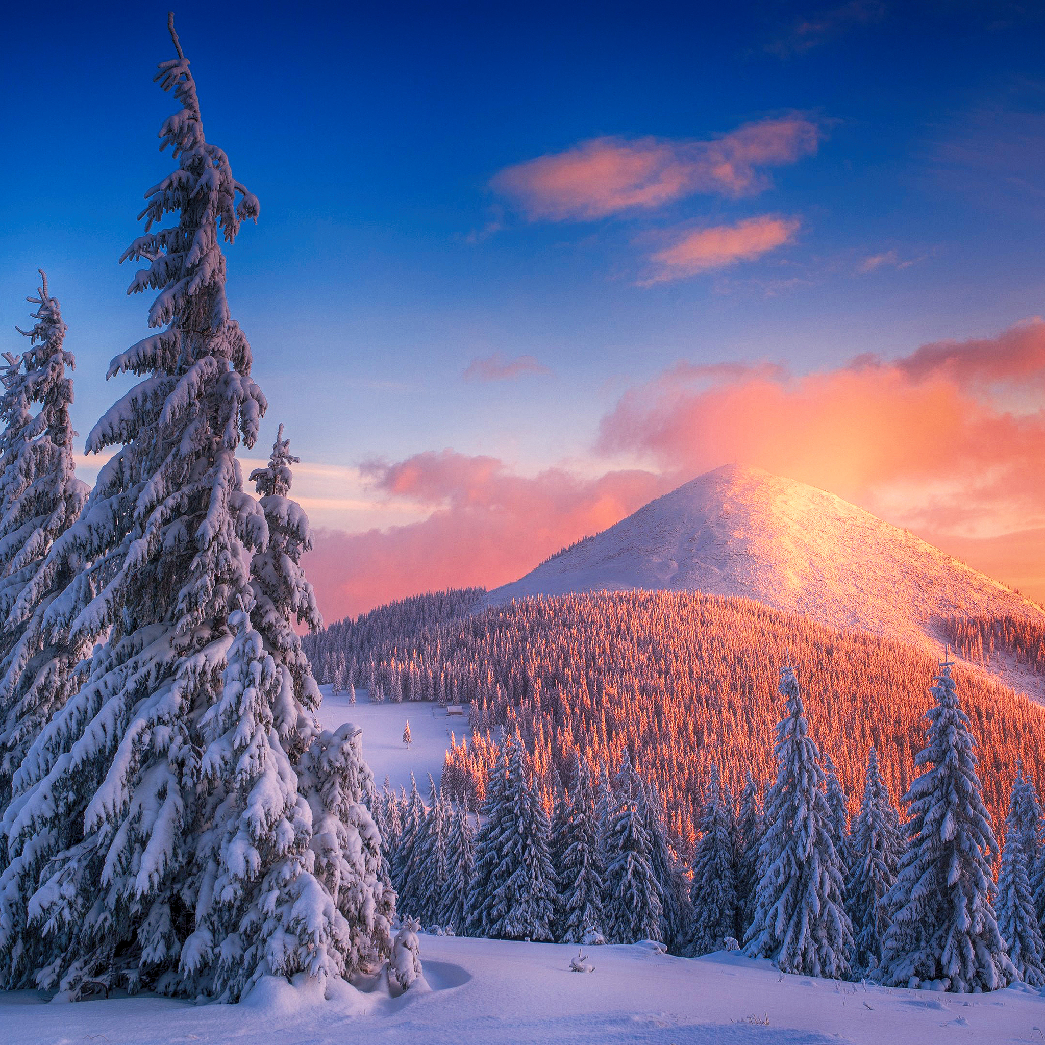 snowy pine trees and mountains 4k