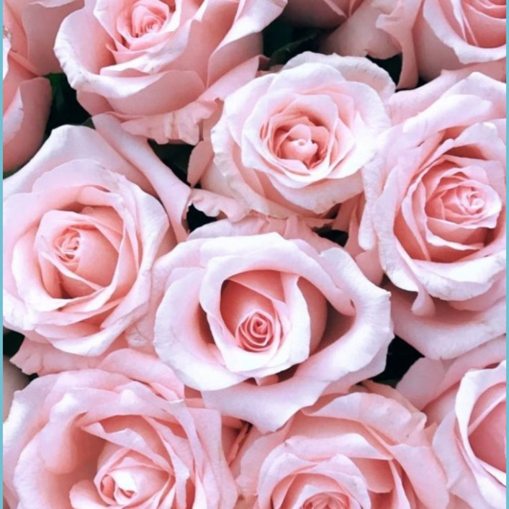 pink rose iphone wallpapers wallpaper cave pink flower wallpaper iphone 1024x1024