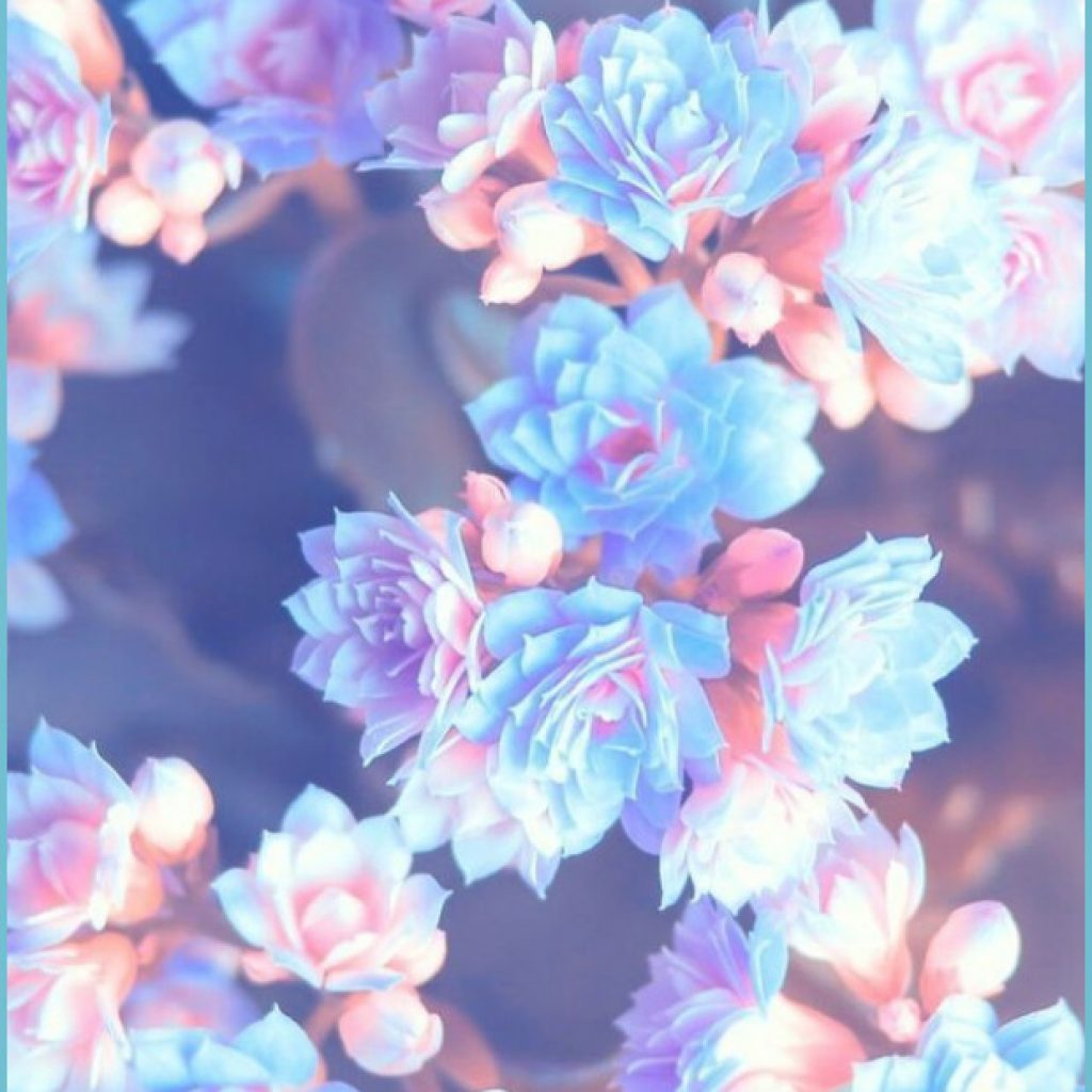 pin by angela on fondos pretty wallpapers cellphone background flower wallpaper 1024x1024