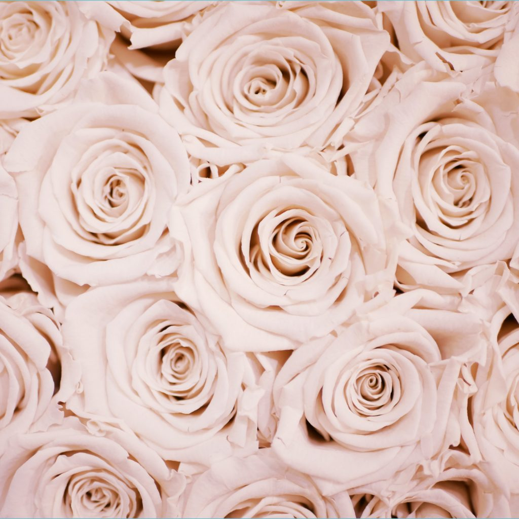 rose gold wallpapers free hd 8 hq unsplash rose gold cute wallpapers