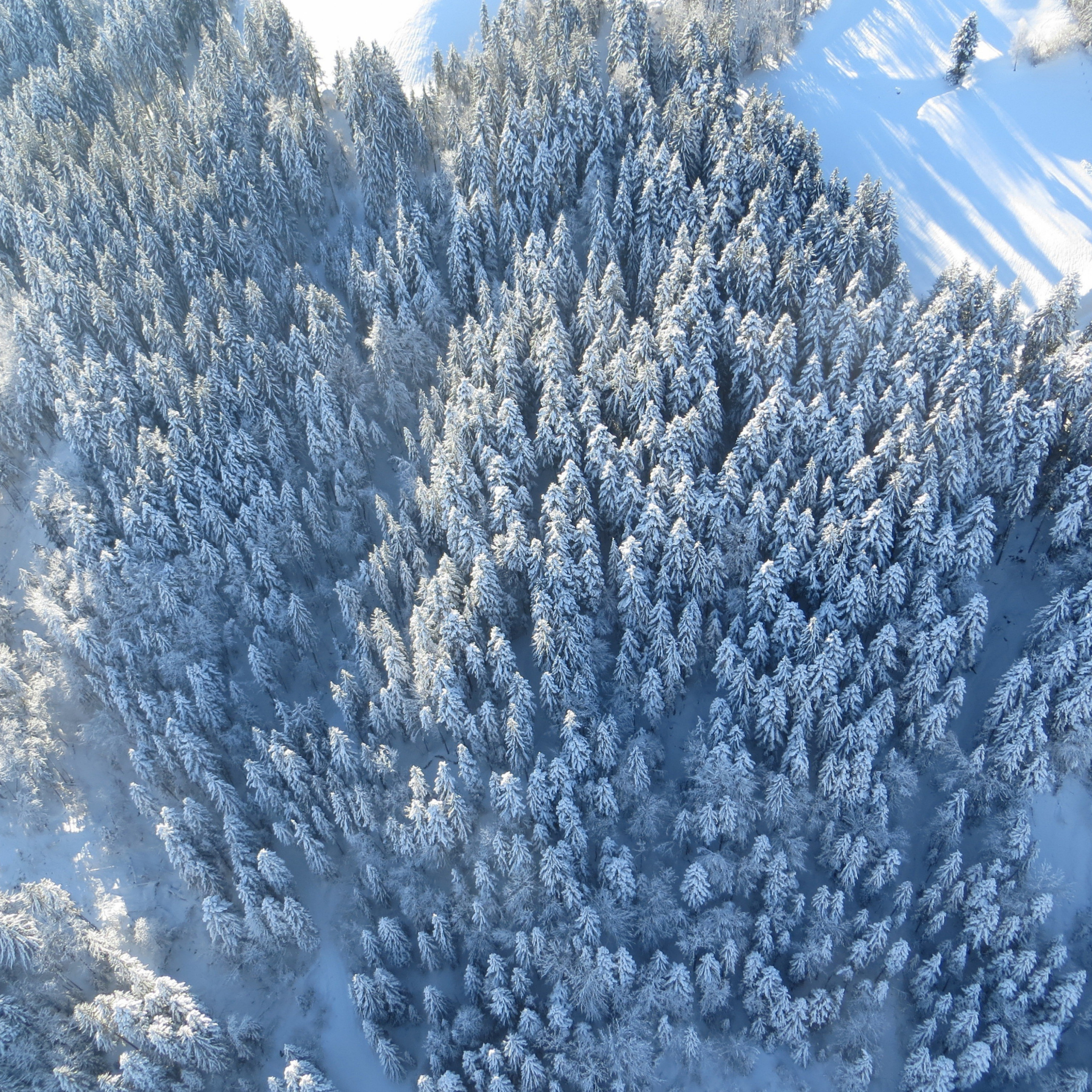 winter forest aerial view 90ff7a