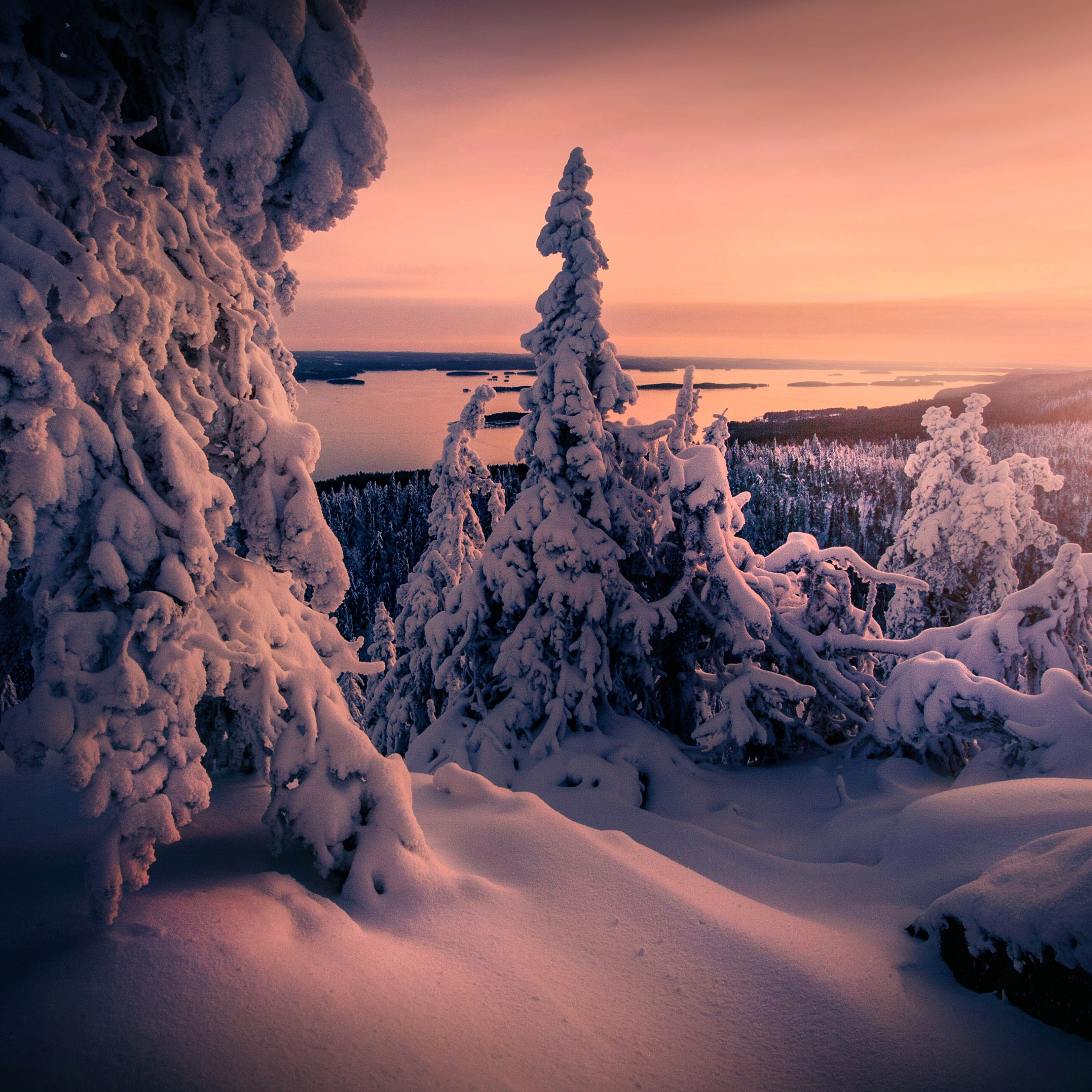 winter snow covered trees 4k wallpapers