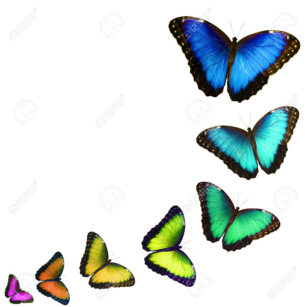 photo a postcard with colorful butterflies isolated on white background the butterflies fly one by one in