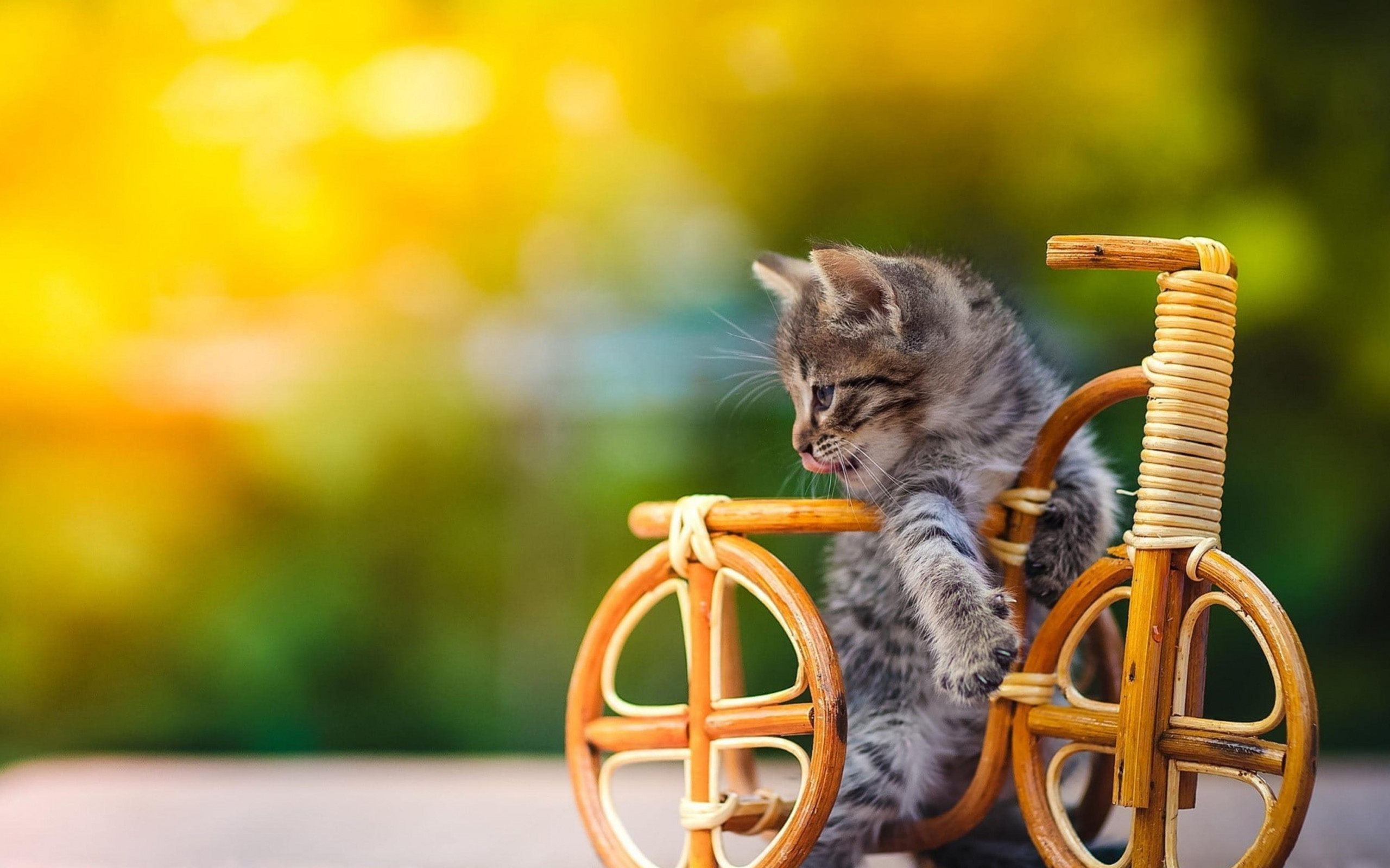 black and white kitten on wooden bicycle in blur green yellow background 4k animals