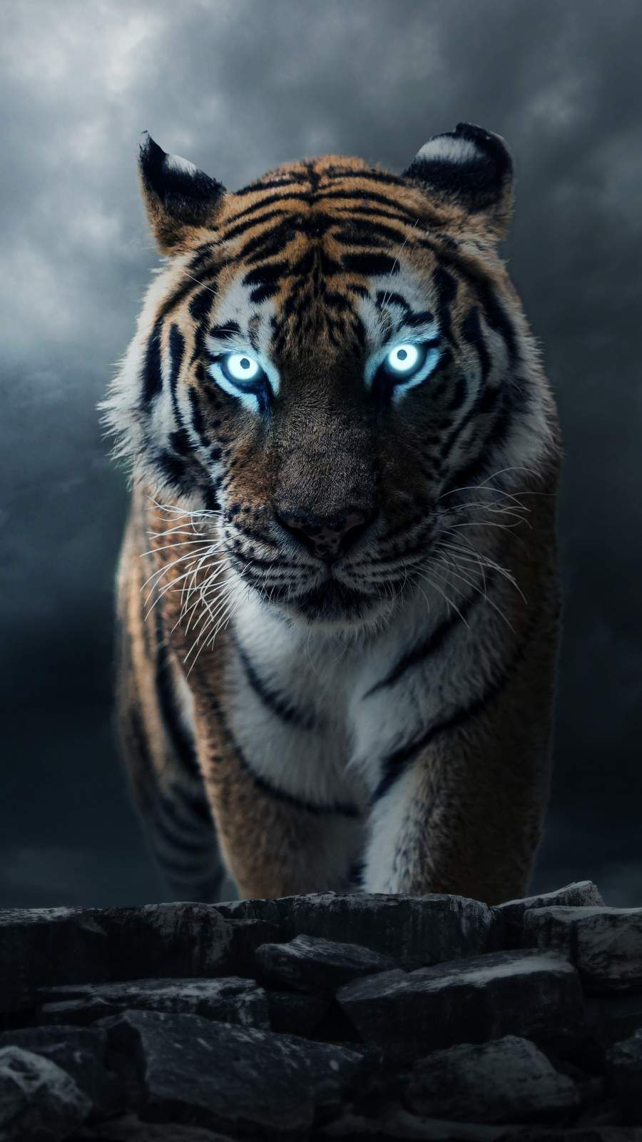 The Alpha Tiger iPhone Wallpaper iPhone Wallpapers