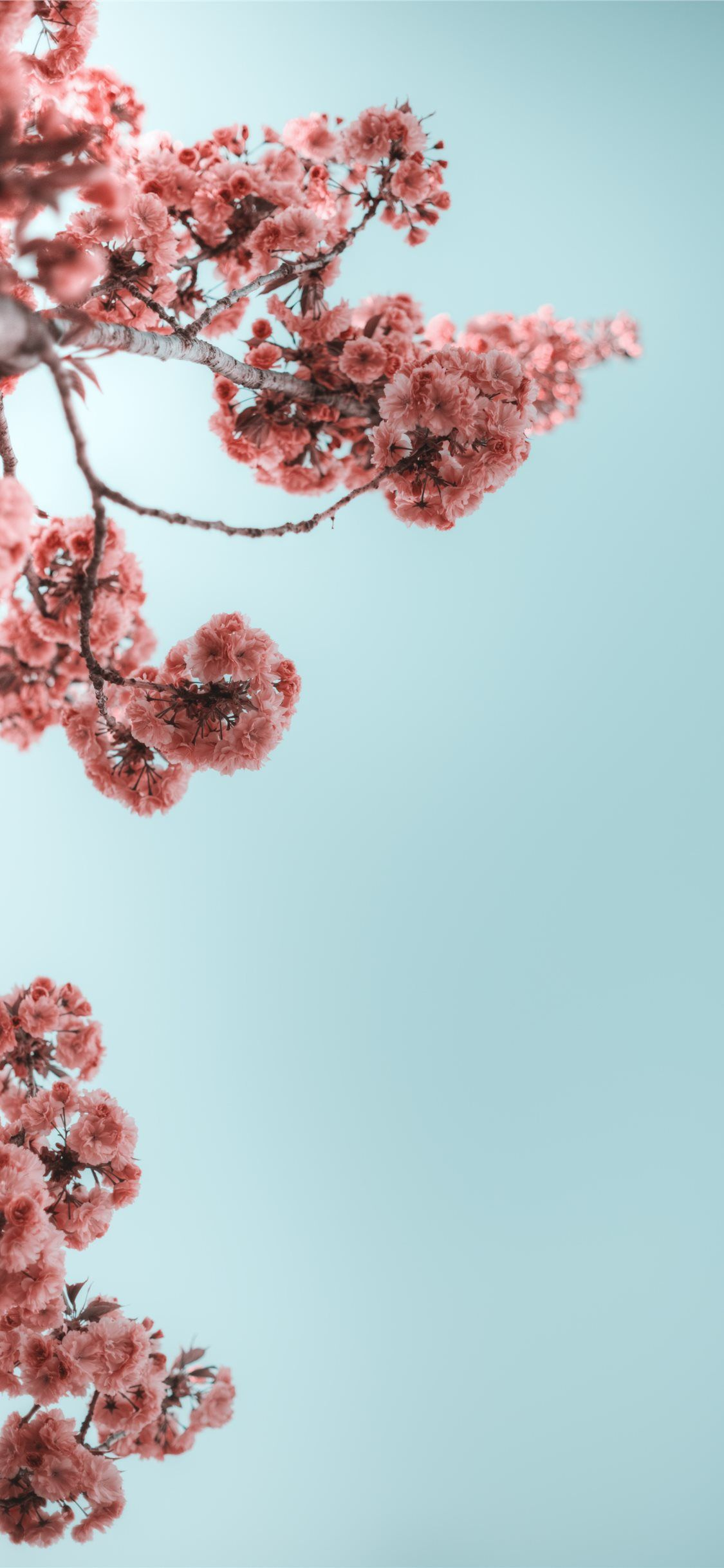 selective photograph of branches with flower iPhone 11 Wallpapers