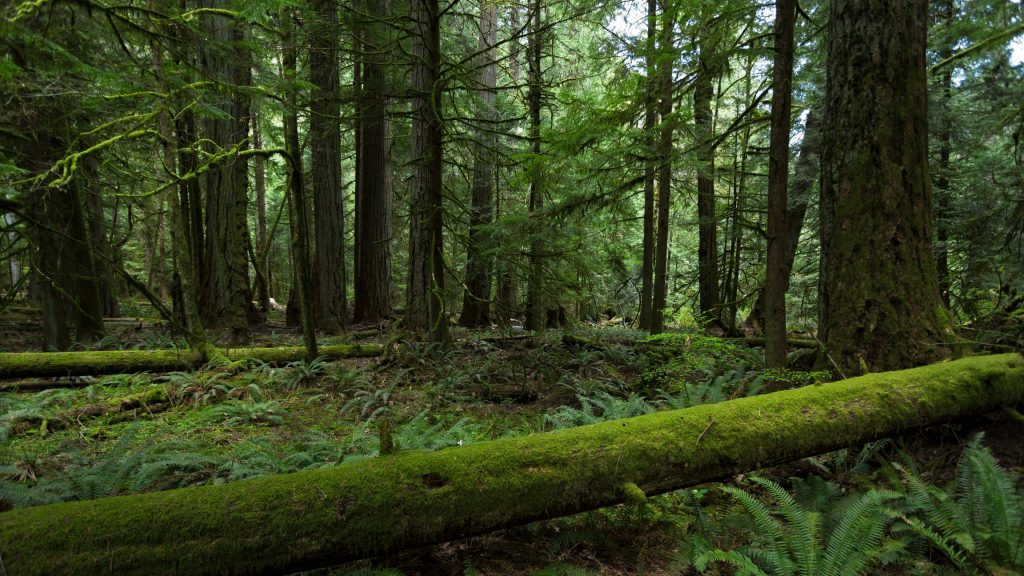 forest trees nature green 4k wallpaper