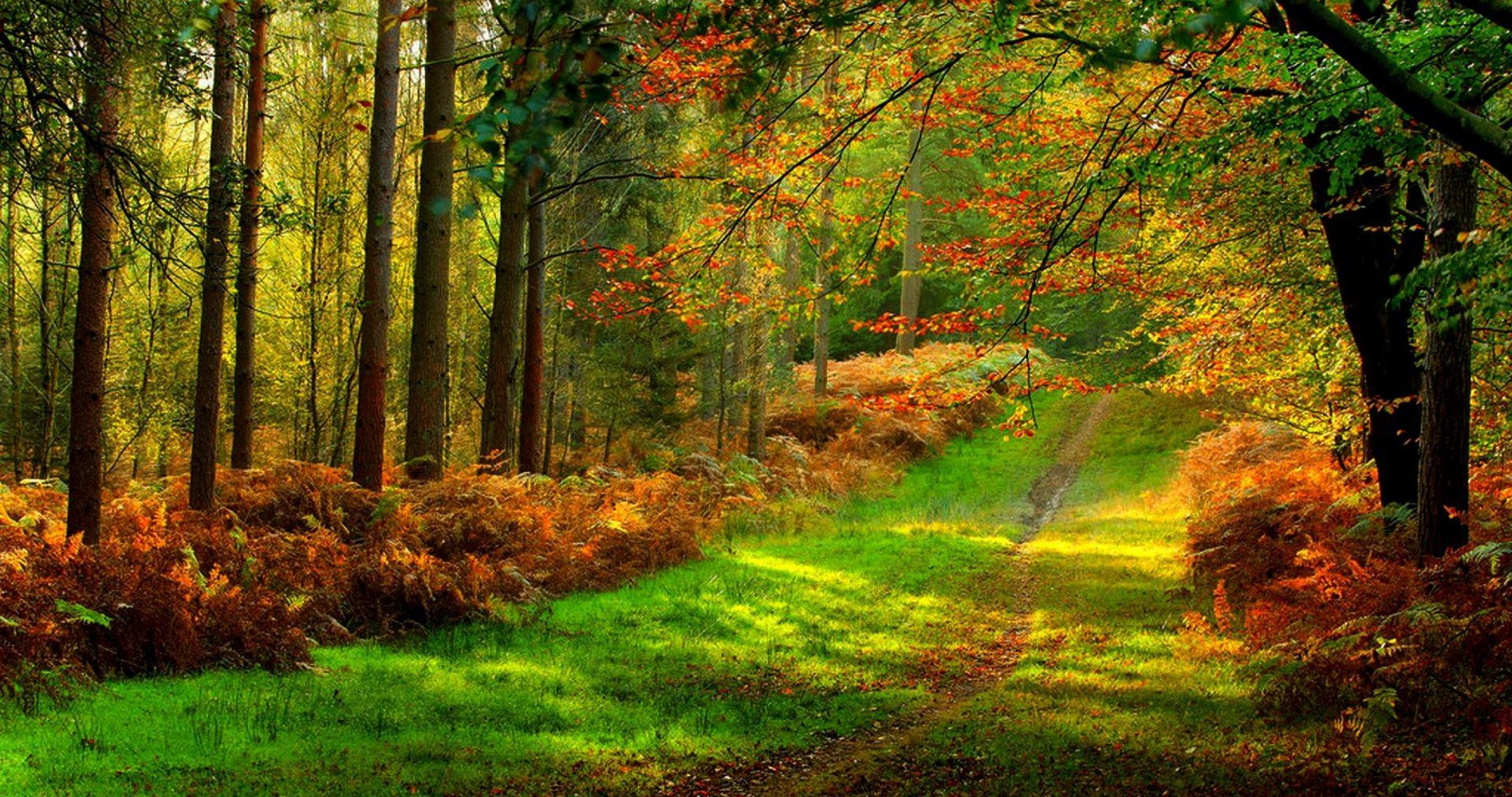 forest road colorful 4k ultra hd wallpaper