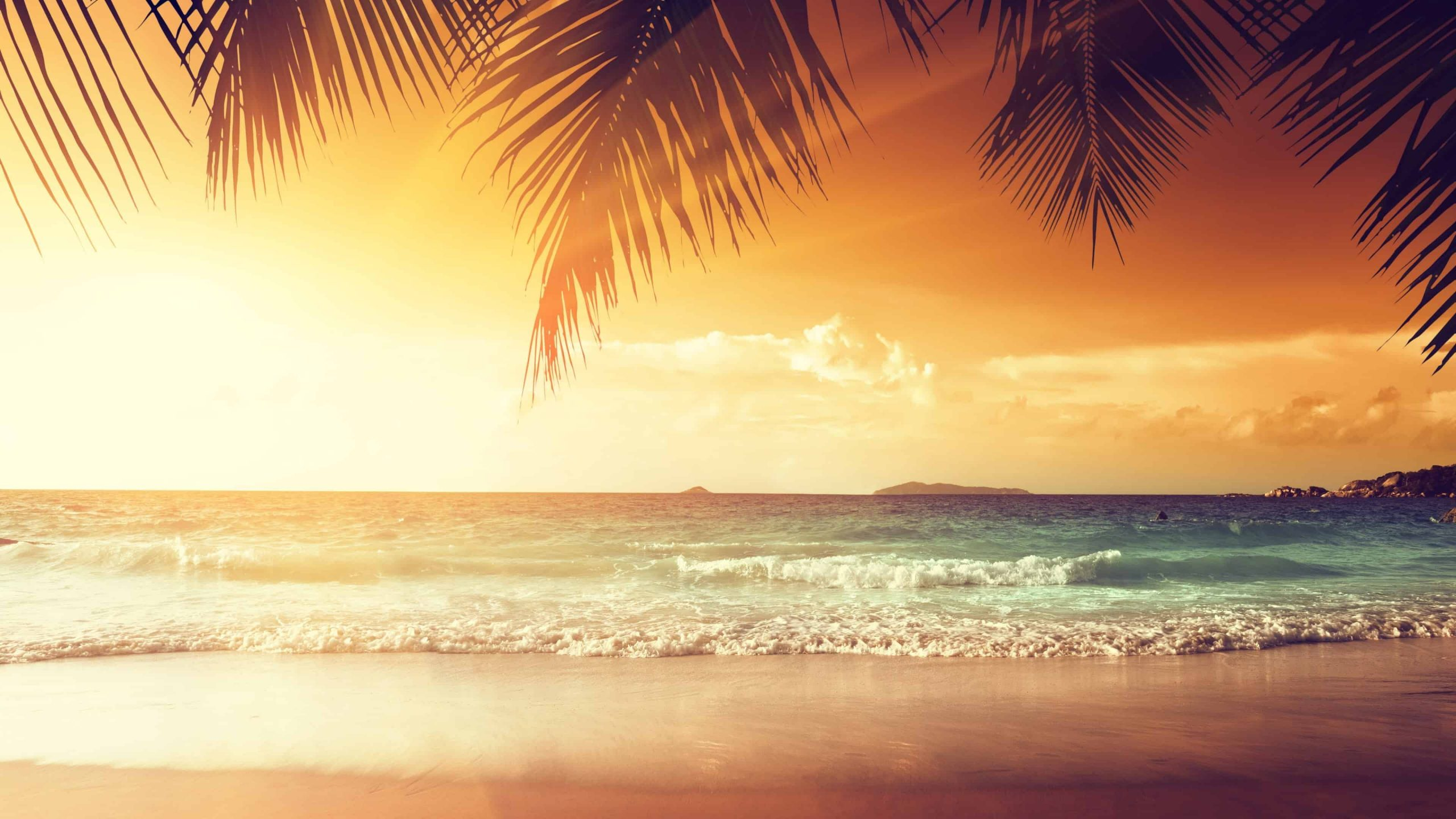tropical beach with palm trees at sunset uhd 4k wallpaper