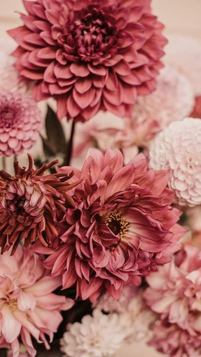The latest iPhone11 iPhone11 Pro iPhone 11 Pro Max mobile phone HD wallpapers free dahlias flowers bouquet pink Free Wallpaper