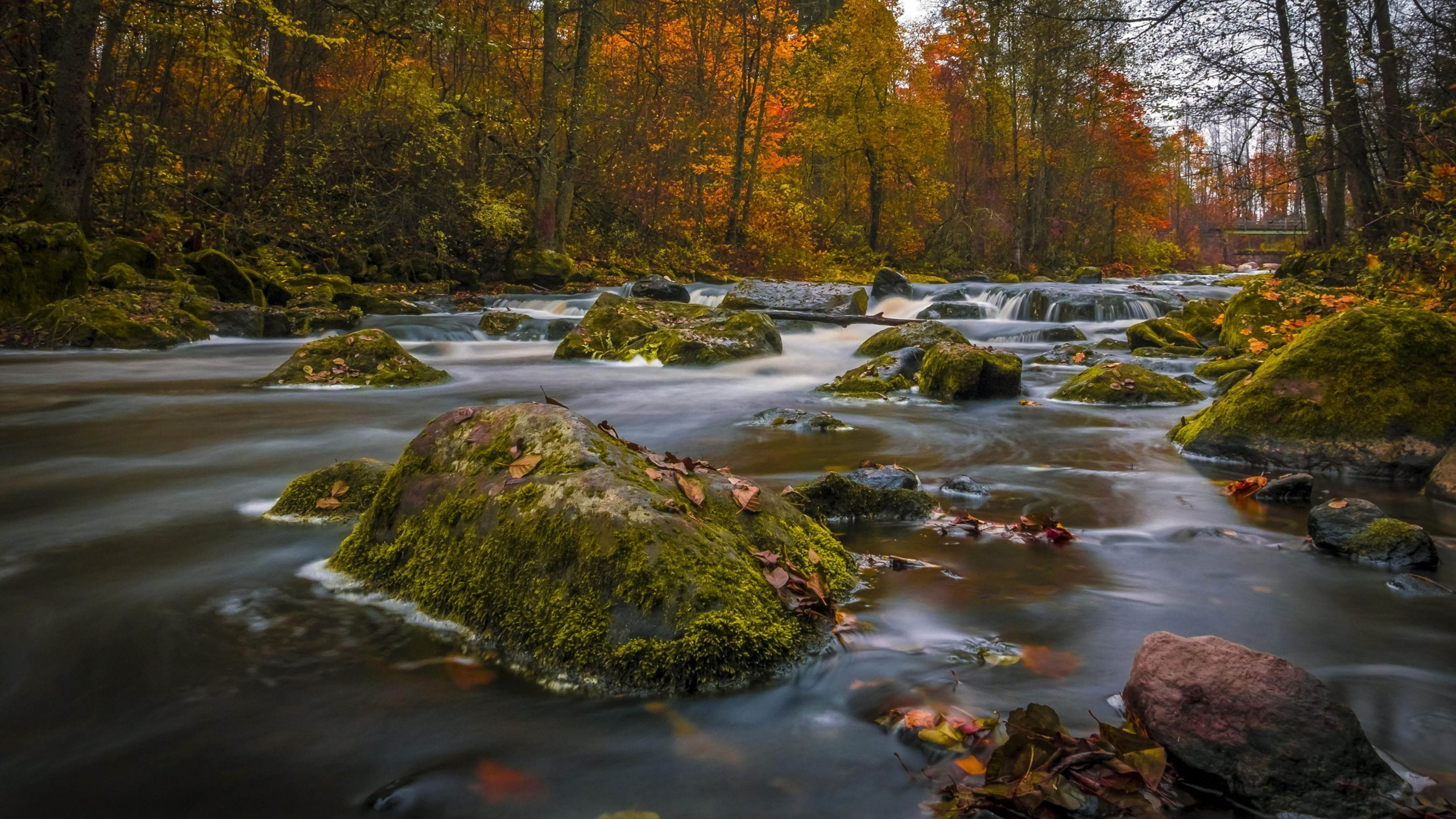 nature landscape autumn colors forests trees river rocks green moss ultra hd 4k puter wallpapers 5000x2813