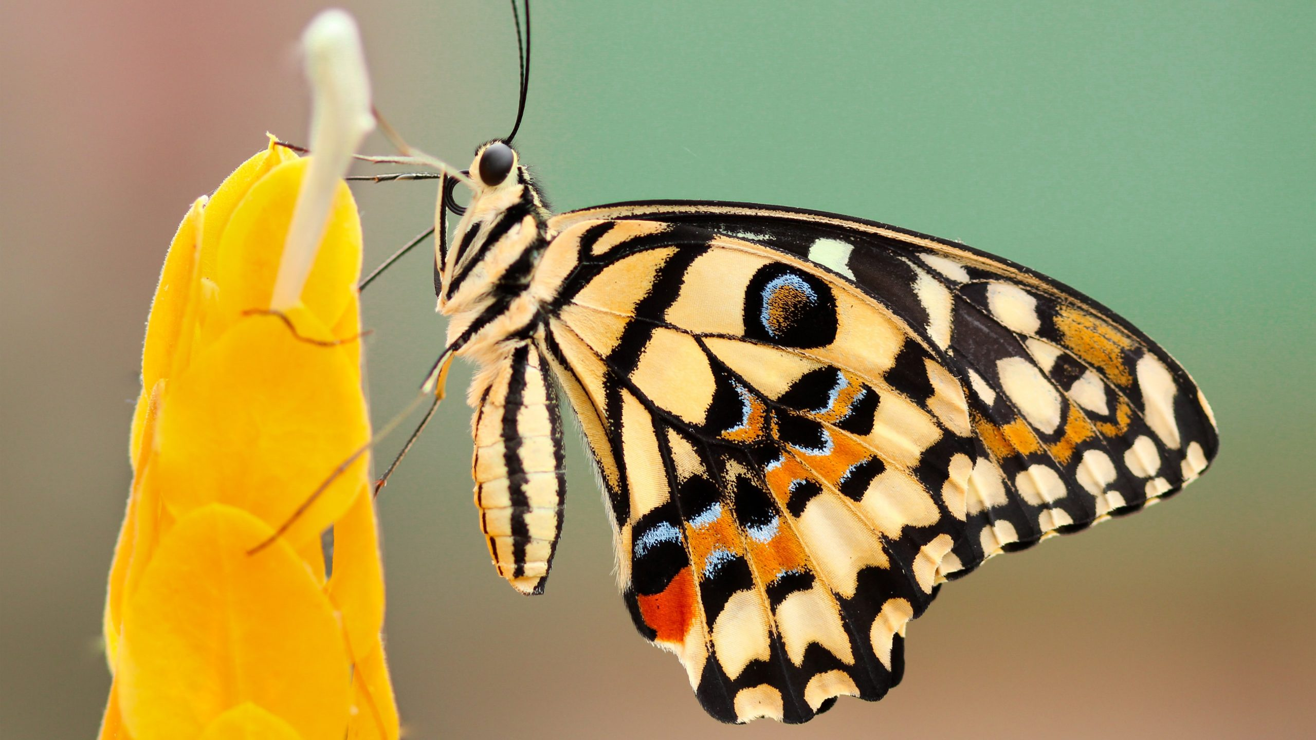 natural butterfly macro photography k wallpaper