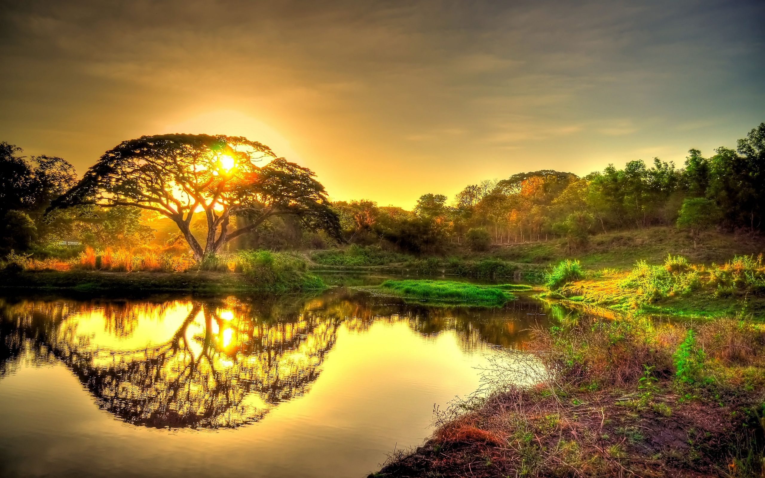 beautiful gold sunrise sky clouds tree lake reflection in water landscape 4k ultra hd wallpapers at wallpaper