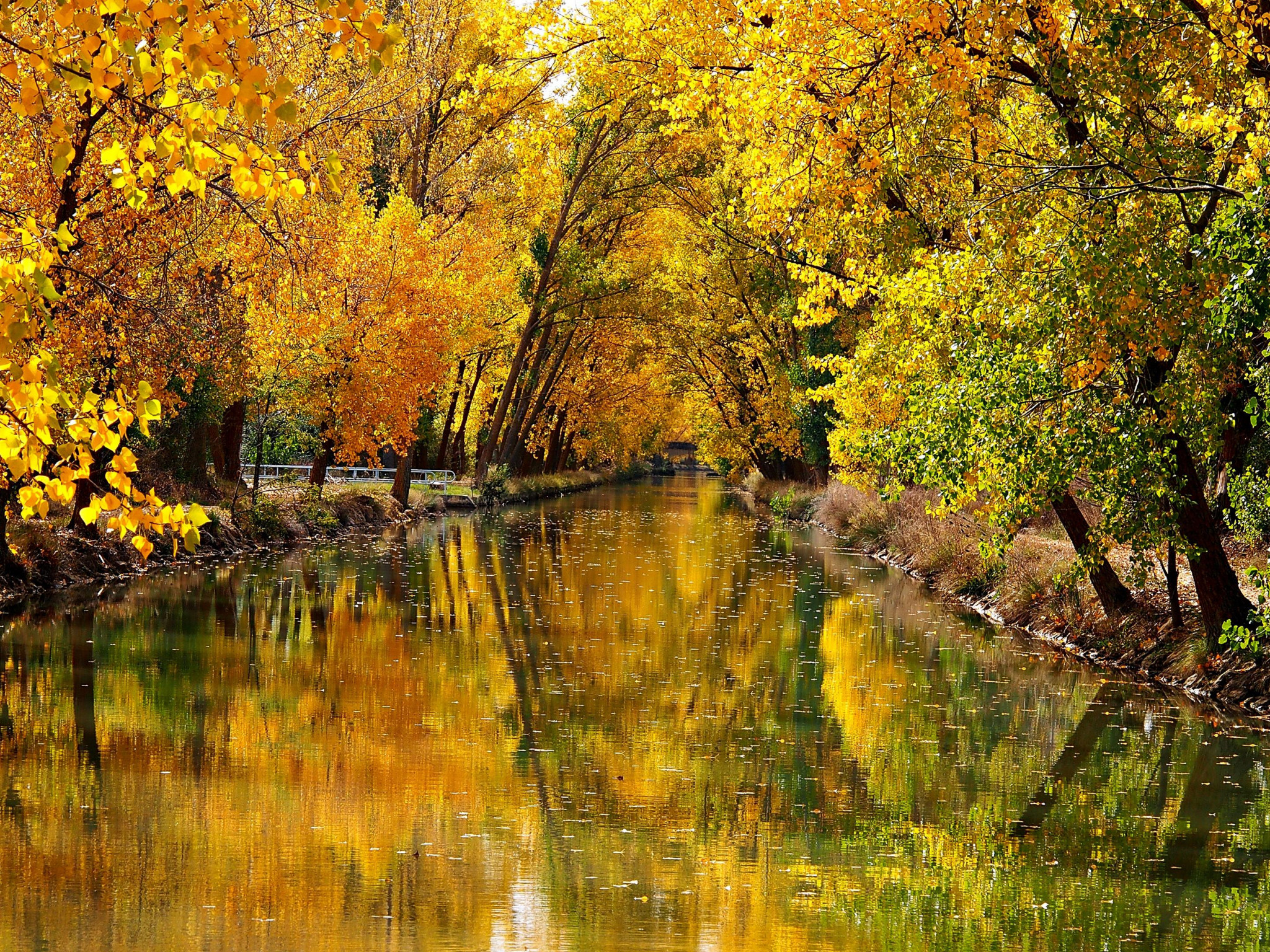 river between leafed yellow autumn trees with reflection 4k nature